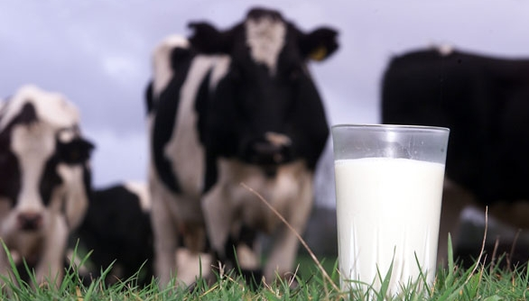 leche-de-vaca