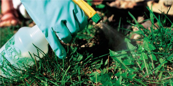 insecticida-eco