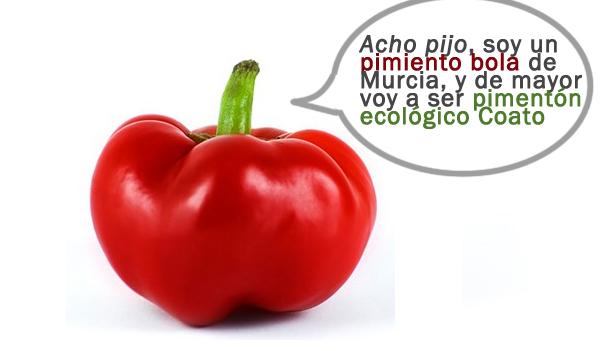 Pimiento-Bola Rojo